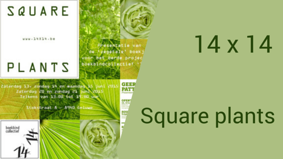 Square Plants